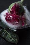 Kleine rood nam bevroren in een blok van ijs toe Royalty-vrije Stock Foto