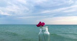 Kleine rosa Blume in der Flasche durch See Lizenzfreies Stockbild
