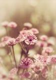 Kleine rosa Blumen Stockbild