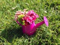 Kleine rosa Gießkanne Stockfoto