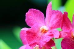 Kleine rosa Orchidee Stockfotos