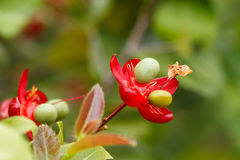 Kleine rosafarbene Blume Lizenzfreie Stockfotografie