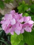 Kleine rosafarbene Blumen Stockbilder