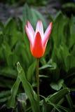 Kleine rote Blume stockfoto