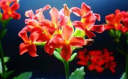 Kleine rote Blumen Stockfotografie