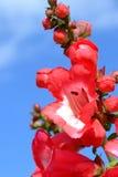 Kleine rote Blumen und blauer Himmel Stockfotos