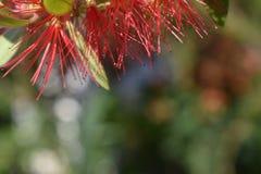 Kleine rote Nadeln stockfotos