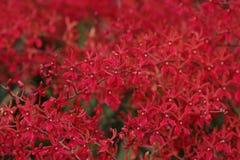 Kleine rote Orchidee auf dem Garten stockfoto