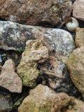 Kleine rote Steine Stockfotografie