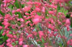 Kleine roze bloemen Stock Afbeeldingen
