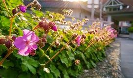 Kleine, roze bloemen stock afbeelding