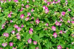 Kleine Roze bloemen met groene bladeren voor achtergrond Royalty-vrije Stock Fotografie