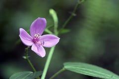 Kleine roze die bloem in Atlantisch Regenwoud wordt waargenomen royalty-vrije stock foto's