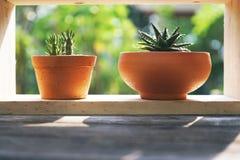 Kleine saftige Blumentöpfe dekorativ auf hölzernem Fenster mit warmem Licht des Morgens stockfoto