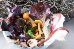 Kleine salade met paddestoelenham en groenten Stock Foto's