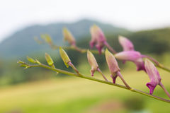 Kleine schöne Orchideenblume Lizenzfreies Stockfoto