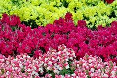 Kleine sch?ne Blumen von verschiedenen Farben nah oben lizenzfreies stockfoto