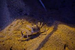 Kleine schaaldier op het strand stock foto's