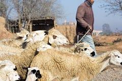 Kleine Schafe in den Bergen Lizenzfreie Stockfotos