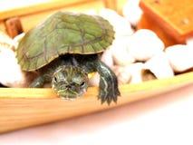 Kleine Schildkröte Lizenzfreie Stockbilder