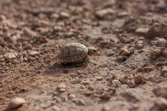 Kleine Schildkröte in das wilde Stockbild