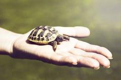 Kleine Schildkröte in der Palme der Hand Lizenzfreie Stockfotografie