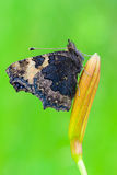 Kleine schildpad Royalty-vrije Stock Fotografie
