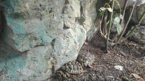 Kleine schildpaddenschildpad in een tuin royalty-vrije stock afbeelding