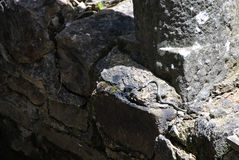Kleine Schlange auf einer Wand stockfotos