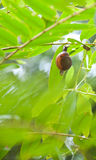 Kleine Schnecke auf dem Baum Lizenzfreie Stockfotografie