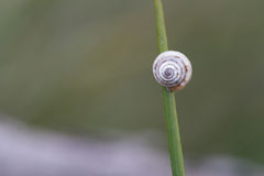 Kleine Schnecke auf einem Thread des grünen Grases Lizenzfreies Stockfoto