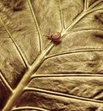 Kleine Schnecke auf grünem Blatt Stockfotos