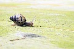 Kleine Schnecke langsam auf Boden stockbild
