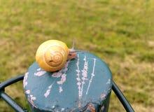 Kleine Schnecke mit gelbem Oberteil auf einem Metallzaun Lizenzfreies Stockfoto