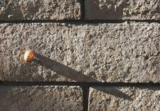 Kleine Schnecke wirft einen großen Schatten Stockbild