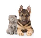 Kleine Schotse kat en de Duitse hond die van het herderspuppy camera bekijken Geïsoleerd op wit Stock Foto's