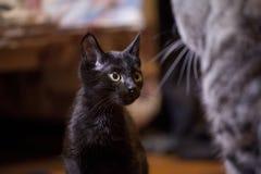 Kleine schwarze Katze Stockfotografie