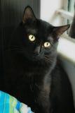 Kleine schwarze Katze Stockfoto