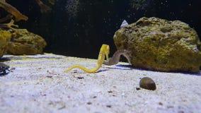 Kleine seahorses die van het leven samen genieten stock foto's