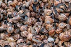 Kleine Seeschnecken am Markt noch lebendig stockfotos