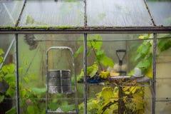 Kleine serre in de herfst stock fotografie
