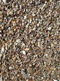 Kleine shells op het strand stock afbeelding