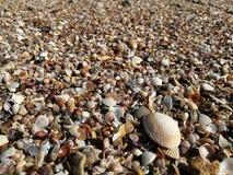 Kleine shells op het strand royalty-vrije stock afbeelding