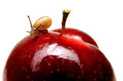 Kleine slak op appel Stock Afbeelding