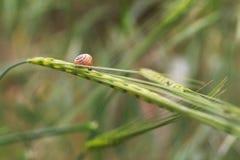 Kleine slak op groen blad stock foto's