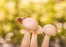 Kleine slak op paddestoelen Royalty-vrije Stock Afbeelding