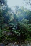 kleine smalle sleep over de wildernisweg in een primair bos stock fotografie