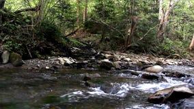 Kleine snelle rivier stock videobeelden