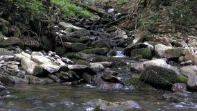 Kleine snelle rivier stock video