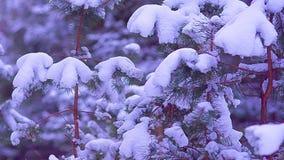 Kleine sparren die met witte sneeuw weer op die worden gevuld die in de wind, een fabelachtig de winterbos bij nacht slingeren stock videobeelden